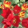 春の花と野菜[楓泉庵]