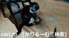 2018年12月1日猫スズ(すず)の写真1812011944[cari.jp(かりるーむ株式会社)鈴木社長ブログ]