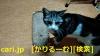 中国は空前の猫ブーム、その影で残酷な仕打ちを受け犠牲になる命[cari.jp(かりるーむ株式会社)鈴木社長ブログ]