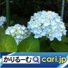 2019年11月分 広報・記事等[cari.jp(かりるーむ株式会社)鈴木社長ブログ]