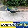 暇なひとときを解消してくれる無料アプリをご紹介します。[cari.jp(かりるーむ株式会社)鈴木社長ブログ]