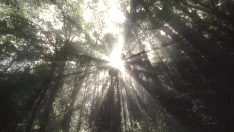 低・緋焔クオリティー-ブロくる