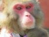 猿まわし&花こま公演のご案内[旅する花こま]