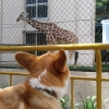 マシュー、池田動物園へ行く[ましゅ〜日記]