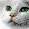猫族宇宙人は多い(性格や仕事 他)[チャネリング23th. 【宇宙Now light】 高品質を目指します!!]