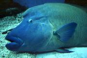 都会の水族館 -魚事典--ブロくる