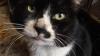 猫の写真 お兄さん猫を助けたサムちゃん[でんでん虫の詩とエッセーとイラスト]
