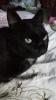 「黒猫オリェちゃんのおまじない」オリジナル曲 鼻歌ウクレレ弾き語り[でんでん虫の詩とエッセーとイラスト]