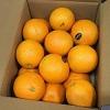 完熟 オレンジ 約3kg(14〜20玉) ネーブル バレンシア 果物 フルーツ 「北海道・沖縄は 1100円」[イージー手作りブログbloggers]