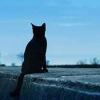 猫の歯石取り[魂の故郷通信]