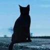 猫の腎臓機能バロメーター[魂の故郷通信]