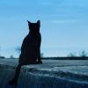 野良猫たちの食糧難[魂の故郷通信]